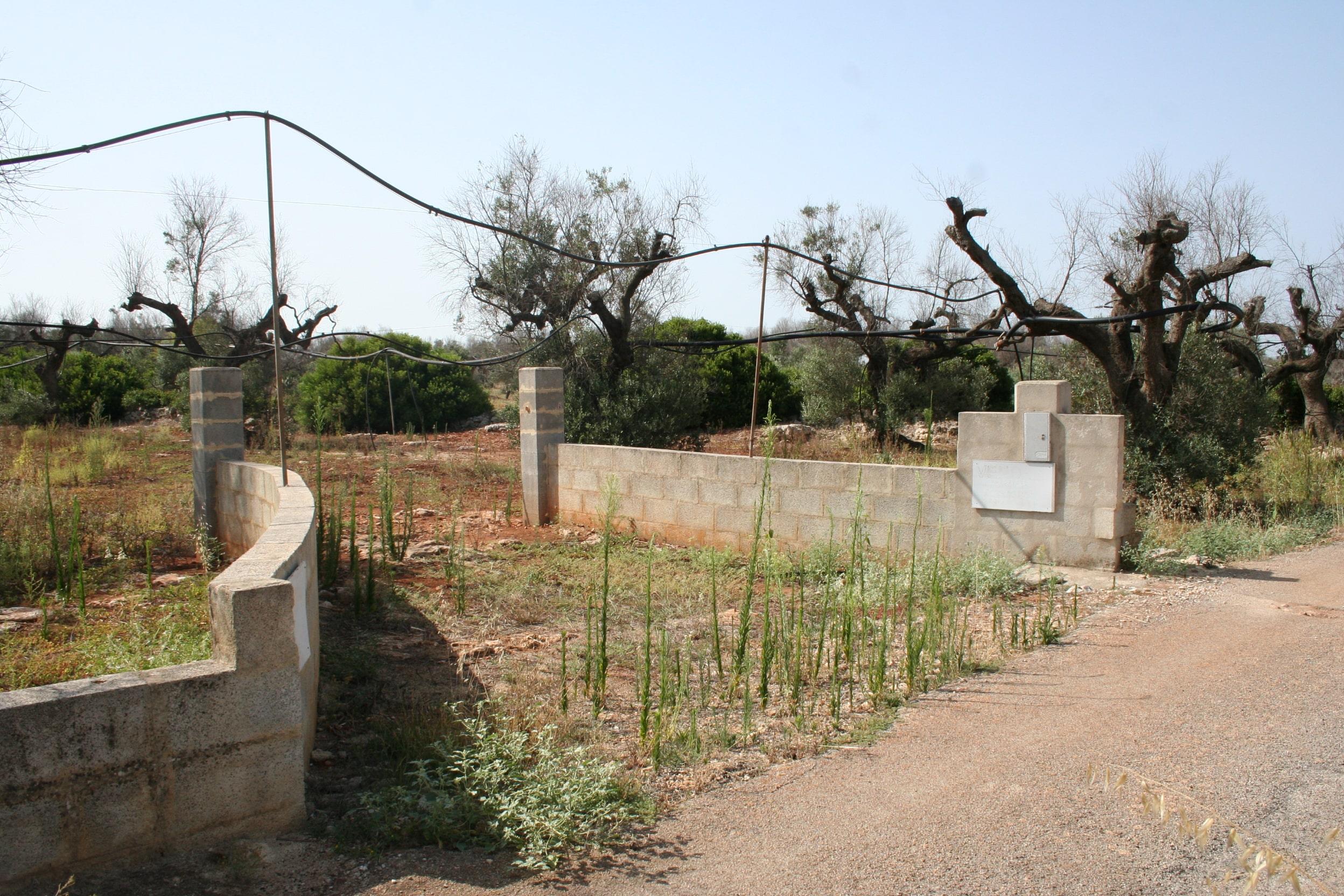 Terreno agricolo con pozzo artesiano