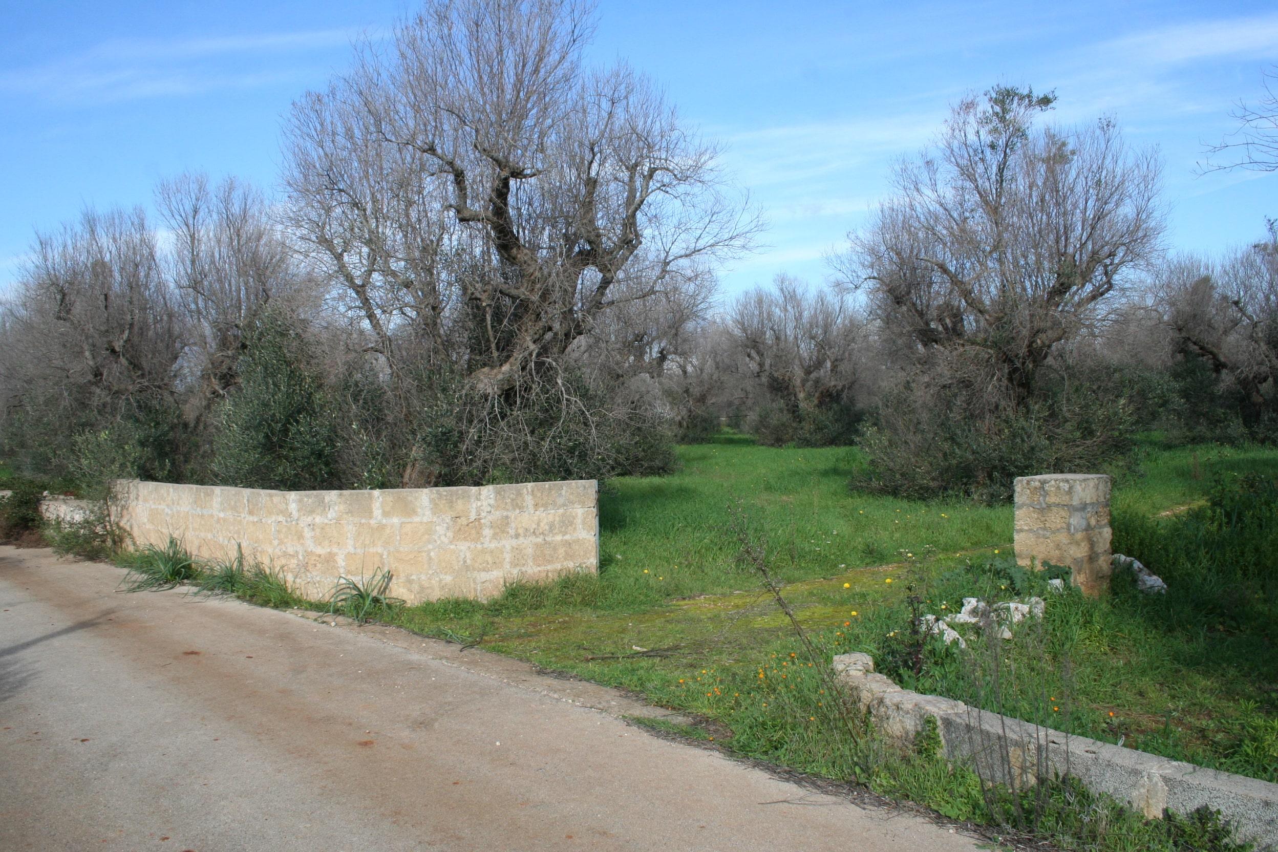 Terreno agricolo con doppio accesso e pozzo artesiano