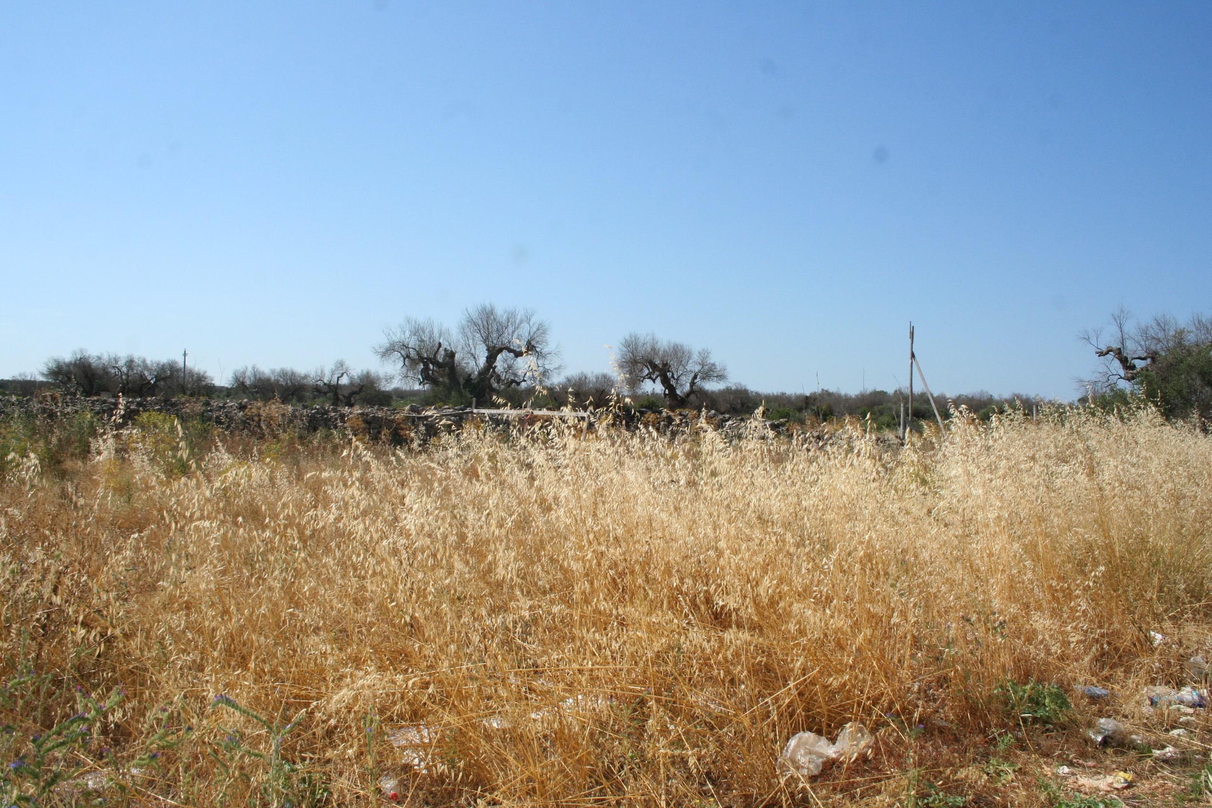 Terreno residenziale con possibilità di realizzare 4 villette