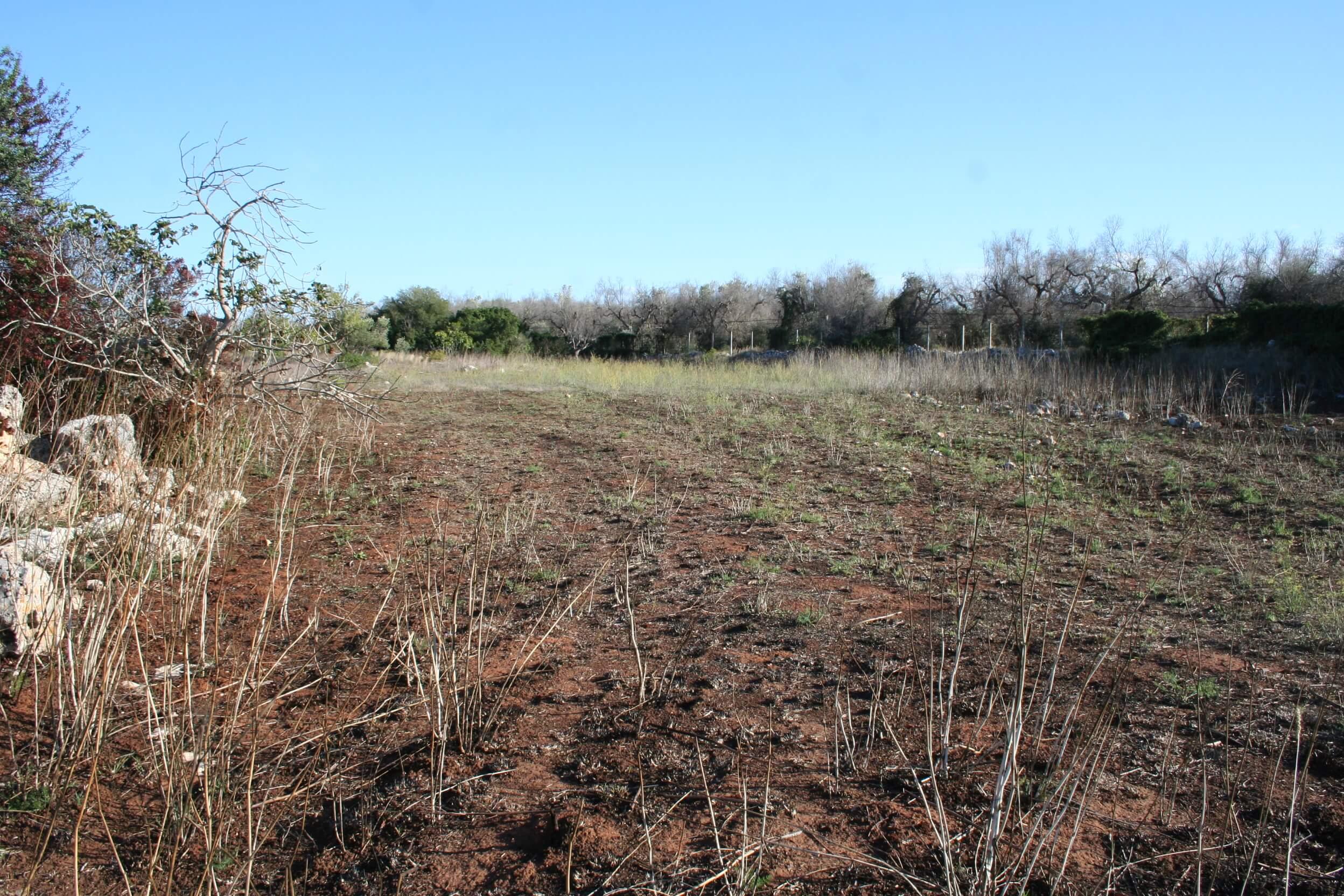 Terreno agricolo seminativo di 2 ettari con possibilità di edificare
